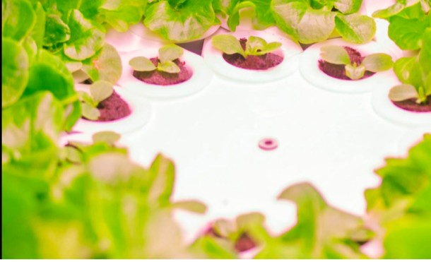 Infarm: 20 Millionen-Kapitalspritze für Indoor-Farming-Start-up